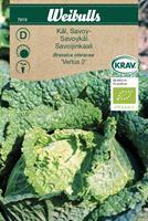 Kål Savoy- 'Vertus 2' KRAV Organic