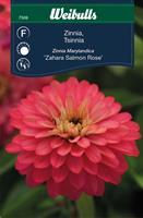 Zinnia Maryland- 'Sahara Salmon Rose'