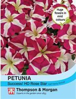 Petunia Success! 'HD Rose Star'