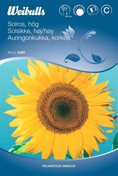 Solros uniflorus