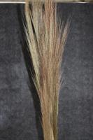 Torkade Chinese broom 300g/bt