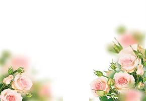 Oasis Kort Mini Pale Pink Roses