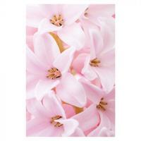 Kort Vikbara Pink Hyacinth 25/fp