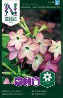 Blomstertobak Avalon Lime/Pur