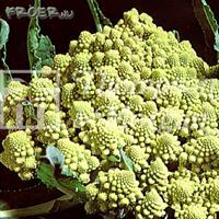 Broccoli 'Romanesco'