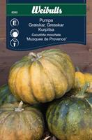 Pumpa 'Musquee de Provence'
