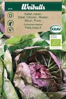 Sallat Rosen- 'Palla Rossa 3' KRAV Organic