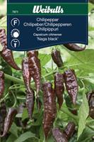 Chilipeppar 'Naga Black'