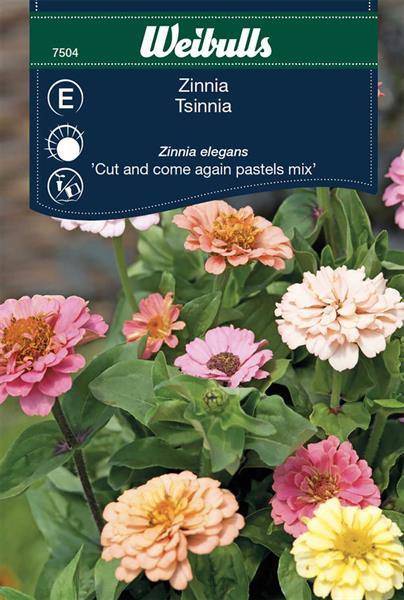 Zinnia 'Cut and Come Again Pastels Mix'