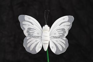 Fjäril trä vit 5,5x8cm 24/fp