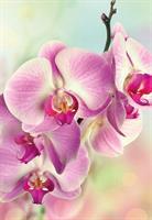Kort Vikbara Pink Orchid 25/fp