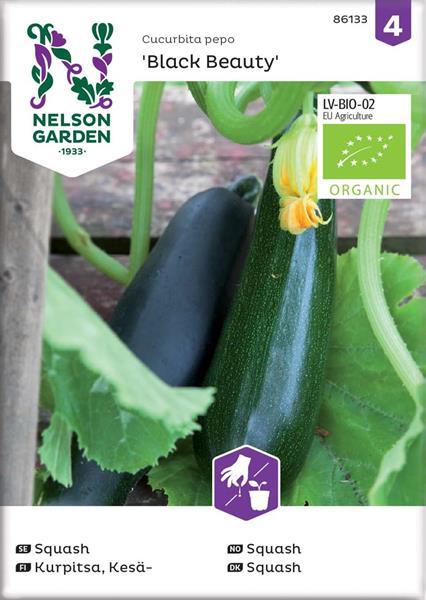 Squash Black Beauty, Organic