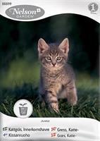 Gräs Katt-