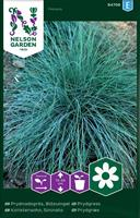 Gräs Blåsvingel