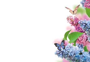 Oasis Kort Blue&Pink Flower& Butterfly