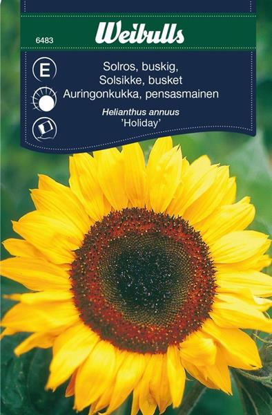 Solros busk  holiday
