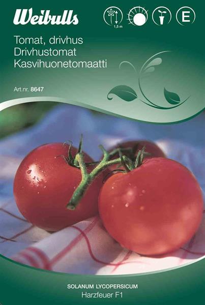 Tomat 'Harzfeuer' F1 drivhus