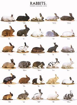 Plansch - Kaniner 2