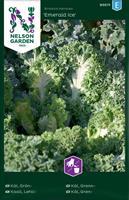 Kål Grön- 'Emerald Ice'