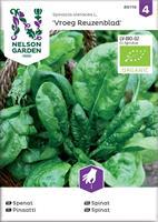 Spenat 'Vroeg Reuzenblad' Organic