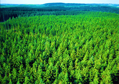 ForestJet concept study highlights opportunities for biojet production