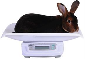 Kaninvåg - digital