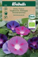 Vinda Purpur- Krav Organic