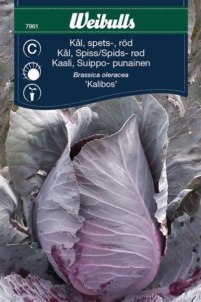 Kål Spets- Röd- 'Kalibos'
