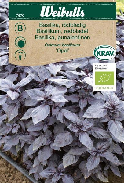 Basilika rödbladig 'Opal' KRAV Organic