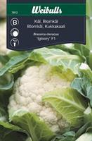 Kål Blom- 'Igloory' F1