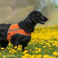 Brava ATTE Koiran huomioliivi, L