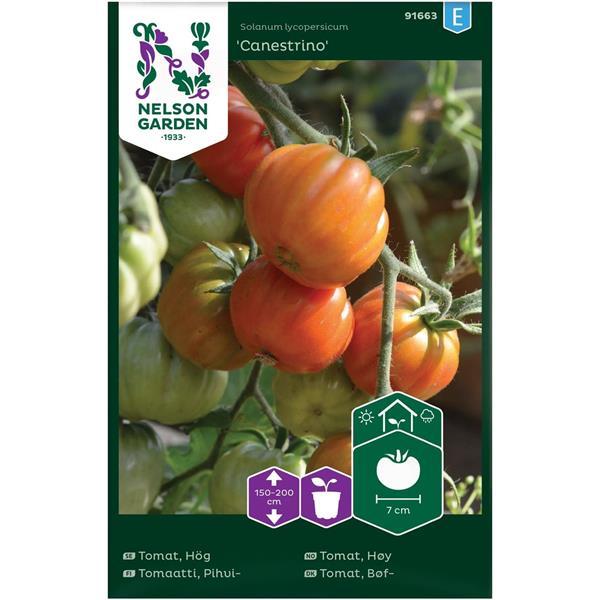 Tomat Biff- 'Canestrino' Hög