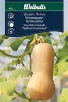 Squash Vinter- 'Waltham Butternut'