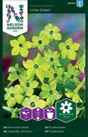 Blomstertobak Lime Green