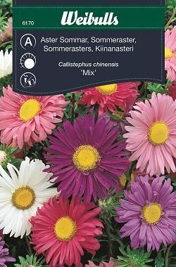 Aster Sommar- Enkelbl. mix