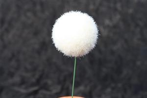 Snöboll vit D4cm med tråd 24/fp