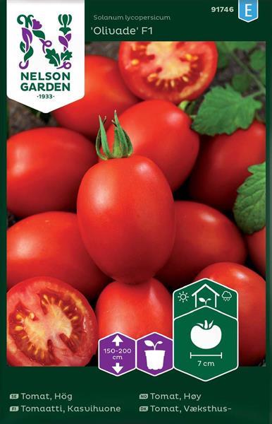 Tomat Plommon- 'Olivade F1' växthus