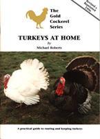 BOK - Turkeys At Home