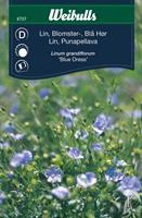 Lin blå blomster
