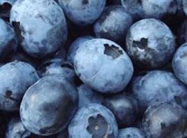 Blåbär Brigitta blue