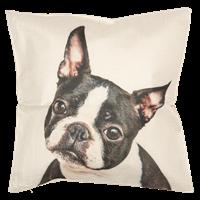 Kuddfordal Fransk bulldog