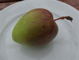 Äpple Melon