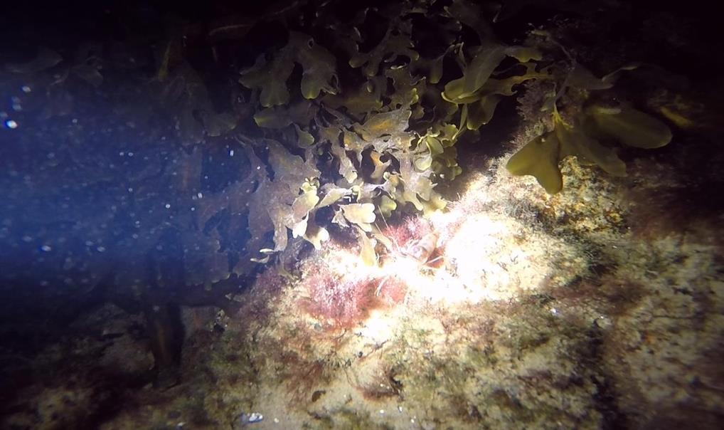 Nattdyk Advanced Open Water Diver