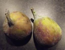 Ficus carica Desert King Fikon r slutsålda