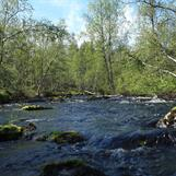 The river by the camp