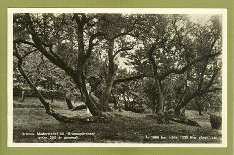 Moderträdet