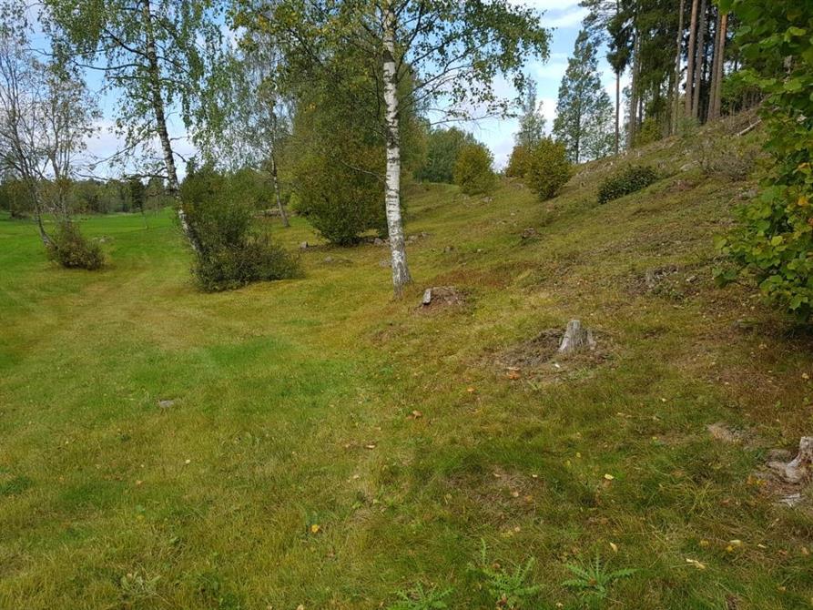 Slåtteräng norr om Bengtsfors i Dalsland där slåttergubbar och andra fina ängsväxter prunkade i juni