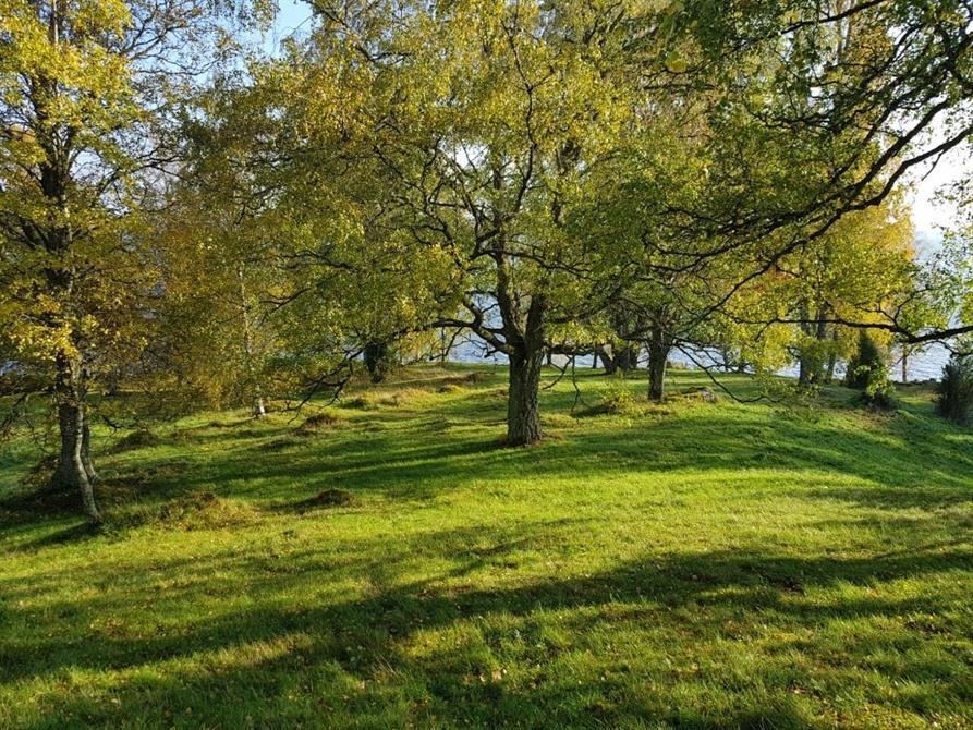 Slåtteräng vid sjön Jogen i Ulricehamns kommun, oktober 2018