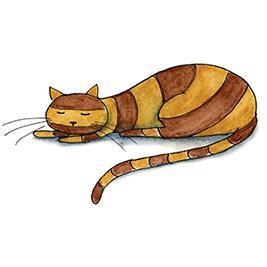 När katten har somnat - lösnot