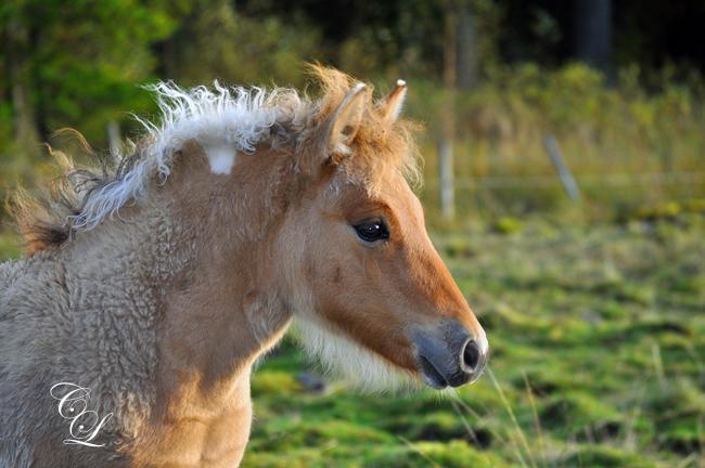 Hästen Sunny Soul 2012